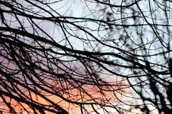 Zima zmierzchu kolory i bezlistny gałąź sylwetek tło Obraz Royalty Free
