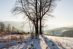 Zima zmierzchu krajobraz z mroźnym zimy światłem słonecznym i drzewami Zimy krajobrazowa scena Zima wiejski krajobraz w zimnym zm Zdjęcie Royalty Free