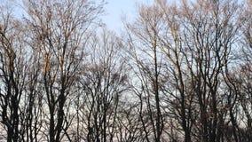 Zima zmierzchu lasowy słońce, drzewa bez liści zbiory
