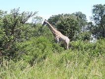 Zimbabwe een natuurlijk paradijs Stock Foto