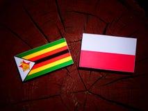Zimbabwe flag with Polish flag on a tree stump isolated. Zimbabwe flag with Polish flag on a tree stump royalty free illustration