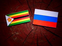Zimbabwe flag with Russian flag on a tree stump  Stock Photos