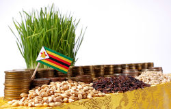 Zimbabwe flag waving with stack of money coins and piles of wheat Royalty Free Stock Photo