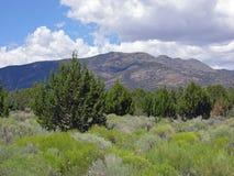 Zimbro de Pinyon e bioma do sábio em Nevada central do leste. Imagem de Stock Royalty Free