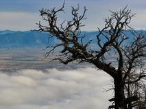 Zimbro e nuvens fotos de stock
