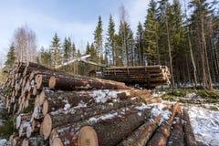 Zimmern Sie das Ernten Blockwinde, die im Winterwald arbeitet Lizenzfreie Stockfotos