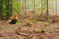 Zimmern Sie Wald mit Baumstümpfen und Staplungsanmeldungshintergrund lizenzfreies stockfoto