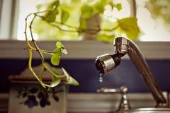 Zimmerpflanze, die um wenig Stückchen des Wassers bittet Lizenzfreies Stockbild
