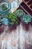 Zimmerpflanzen stockfotografie