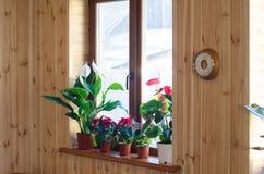 Zimmerpflanzen auf Fenster Lizenzfreies Stockfoto