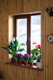 Zimmerpflanzen auf Fenster Lizenzfreie Stockfotografie