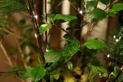 Zimmerpflanzen mit Stimmungslichtern lizenzfreie stockfotos
