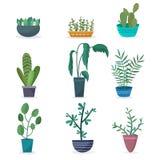 Zimmerpflanzen und Blumen in den Töpfen Stockfotos