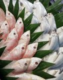 Zimna świeża ryba zdjęcie stock