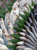 Zimna świeża ryba obrazy royalty free