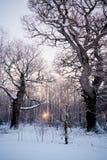 zimna część ciepła zima Obrazy Royalty Free