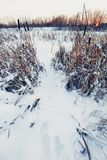 zimna dzień zima Obraz Royalty Free