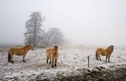 zimna dzień koni zima Fotografia Stock