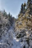 zimna futerkowa drzewo zima Obrazy Royalty Free