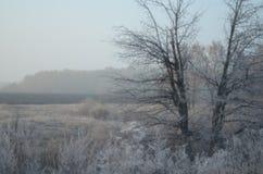 Zimna opóźniona jesień zdjęcie royalty free