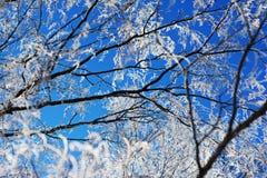 zimna pogoda zdjęcie royalty free