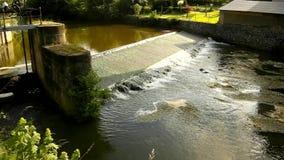 Zimna woda mały rzeka przepływ nad małym kamienistym jazem Mały wodny kwiat w okwitnięciu pod jazem w czochrach błotnista woda zbiory wideo
