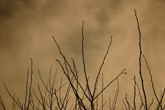 zimna zima zdjęcie stock