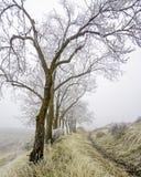 Zimna zima oszroniejąca na drzewach z mgłą Obraz Royalty Free