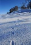 zimnego dzień lodu ładna s zima Obrazy Stock