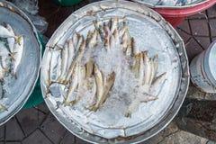 Zimnego owoce morza mała surowa świeża ryba Fotografia Stock