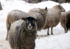 zimni cakle grżą zima Zdjęcie Royalty Free