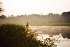 Zimni mgłowi ranki zdjęcie stock