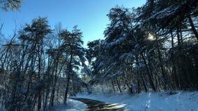 zimno fotografia stock