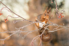 Zimno gałąź Fotografia Royalty Free