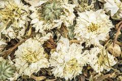 Zimno, grypa i kaszlowa ziołowa herbata, obraz stock