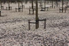 Zimno park Zdjęcia Royalty Free