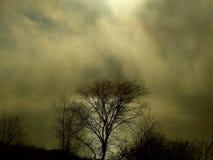 zimno świt Zdjęcia Stock