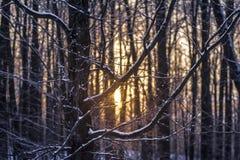 Zimny ale ciepły wschód słońca Obrazy Stock