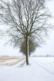 zimny drzewo Fotografia Royalty Free