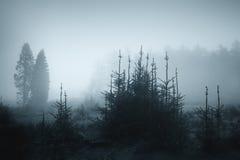 Zimny i rainny krajobraz w monochromu Zdjęcie Stock
