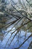 zimny jeziorny drzewo Fotografia Royalty Free