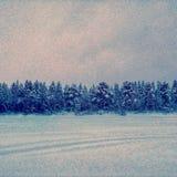 zimny las obrazy stock