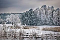 Zimny las i śnieżna łąka zdjęcia royalty free