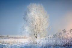 Zimny las i śnieżna łąka obrazy stock
