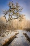 Zimny las i śnieżna łąka zdjęcie stock