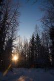 Zimny lasowy zmierzch Fotografia Stock