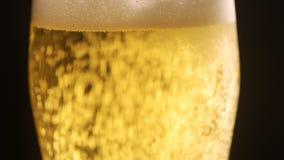 Zimny lekki piwo z bąblami w szkła i obcieknięcia kondensacie opuszcza zdjęcie wideo