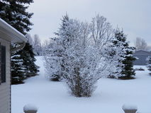Zimny mroźny śnieżny dzień obrazy royalty free