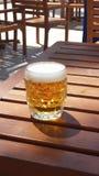Zimny piwo na słońcu zdjęcie royalty free