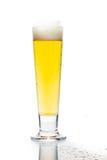 Zimny piwo w wysokim szkle z odbiciem i odizolowywającym w bielu Zdjęcia Royalty Free